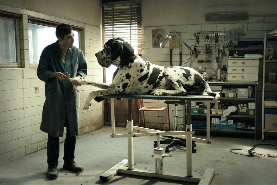 Recensie Dogman Cinemagazine
