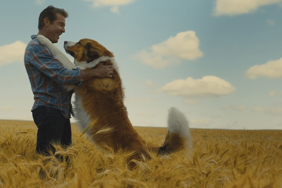Recensie A Dog's Journey Cinemagazine