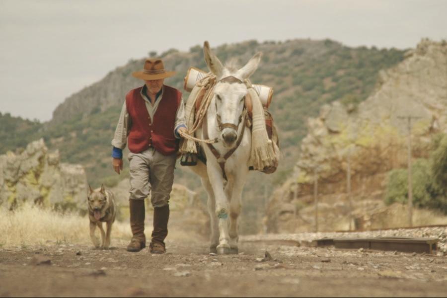 Recensie Donkeyote Cinemagazine
