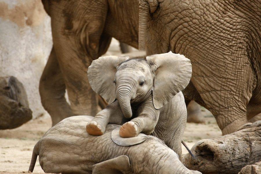 Recensie Elephants Up Close Cinemagazine