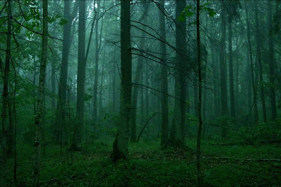 Favoriete films 2018: The Ancient Woods