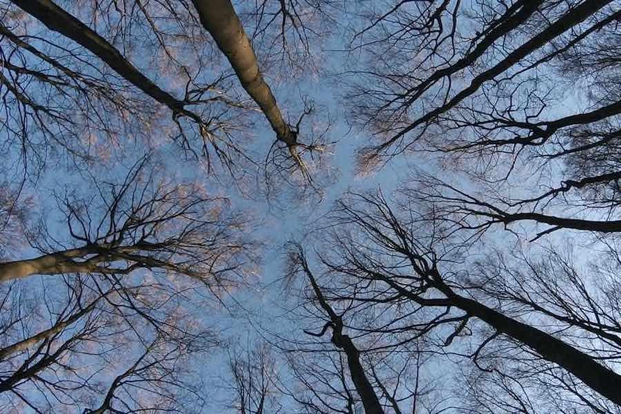 Recensie The Hidden Life of Trees Cinemagazine
